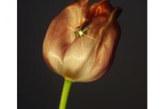 florenceandnicolas_7